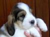 15.05.2005 - 4 Welpen