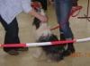 18.11.2007 – Treffen mit Ausstellung