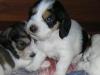 19.08.2006- 4 Rüden
