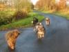 Unsere  Spaziergänge mit Übungen