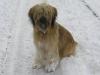 Wäller vom Mount Palis 12.2005 im Schnee