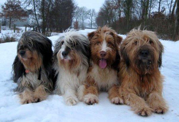 Wesensfeste und schöne Hunde