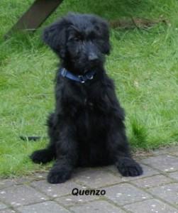 Quenzo12Wo-blau