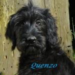 QuenzoKopf660